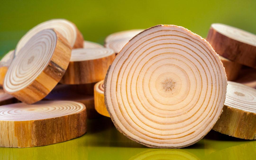 «La importancia de la industria forestal». Artículo de ADEMAN para la Revista de FORESNA