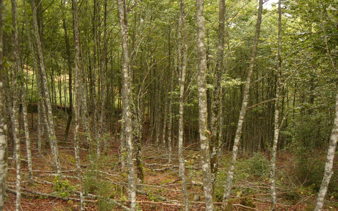 Ayudas para actividades forestales promovidas por entidades locales y agentes privados
