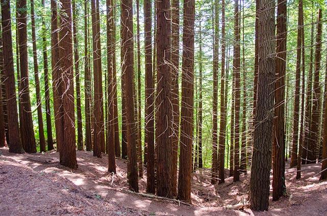 Recomendaciones en Prevención de Riesgos Laborales para empresas del sector forestal: COORDINACIÓN DE ACTIVIDADES EMPRESARIALES.
