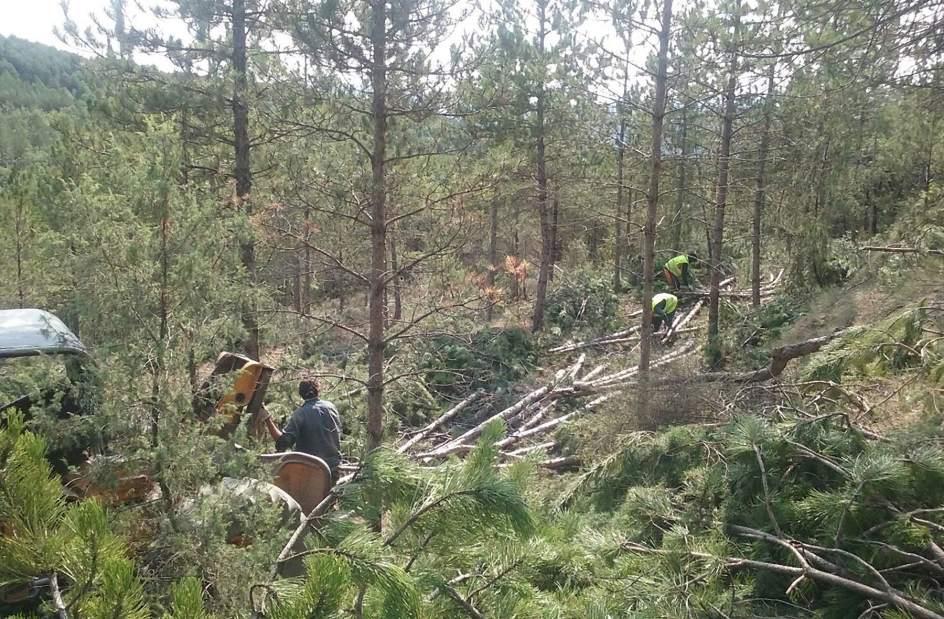 Recomendaciones en Prevención de Riesgos Laborales para empresas del sector forestal: CARACTERÍSTICAS DE LA EXPLOTACIÓN