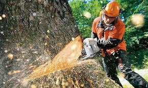 Cursos de motosierra y seguridad en el manejo de maquinaria forestal.