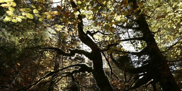 Publicadas para 2018 las Ayudas para Actividades Forestales promovidas por entidades locales y agentes privados