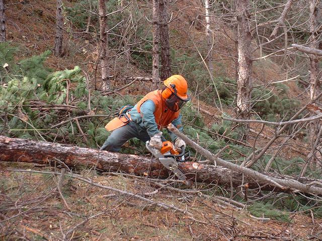 ADEMAN participa en un Taller de riesgos forestales junto con Servicios de Prevención Ajenos
