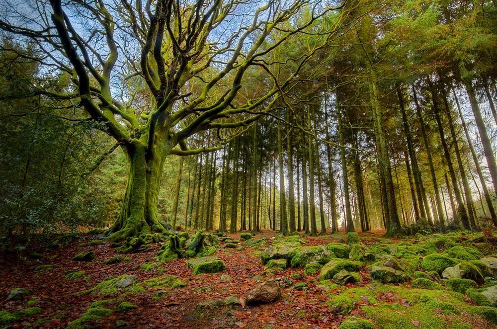 Publicadas para 2019 las Ayudas para Actividades Forestales promovidas por entidades locales y agentes privados