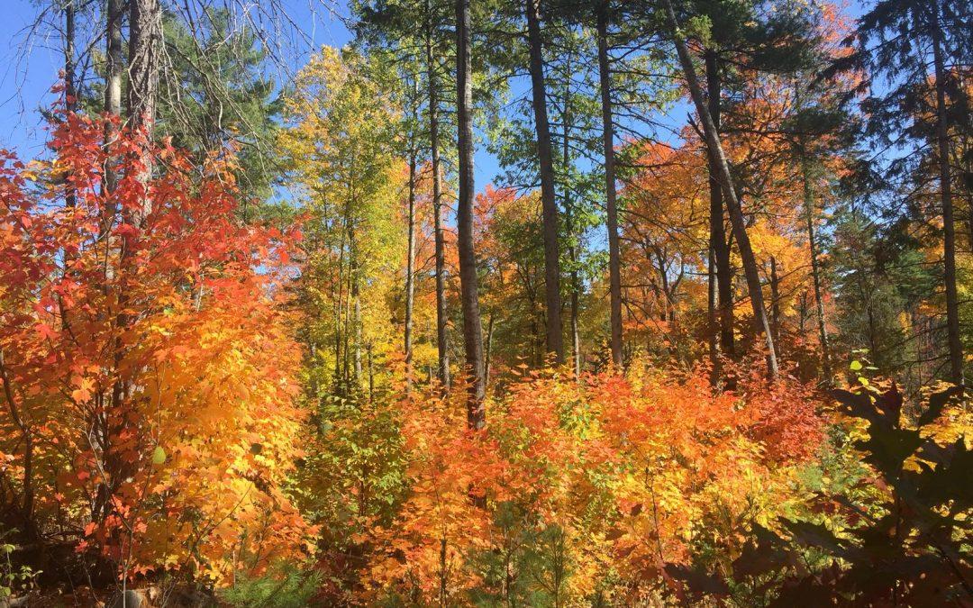 Empresas del sector de la madera realizan una misión internacional a Canadá para conocer al país referente de la madera en el mundo