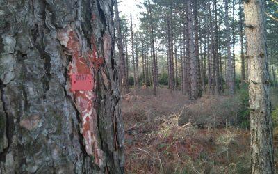 Finaliza la formación con el Guarderío Forestal de Navarra para la mejora de la seguridad laboral en los aprovechamientos forestales