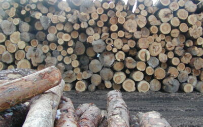 El impacto del Covid-19 en el mercado europeo de la madera