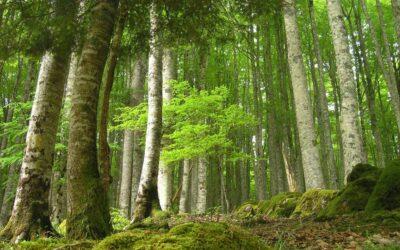 Publicadas para 2020-2021 las Ayudas para Actividades Forestales promovidas por entidades locales y agentes privados
