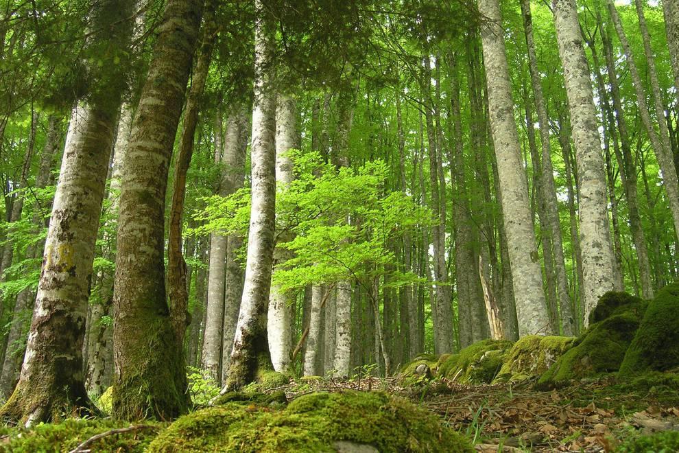 Publicada la convocatoria para 2021-2022 de las ayudas a trabajos forestales promovidos por entidades locales y agentes privados